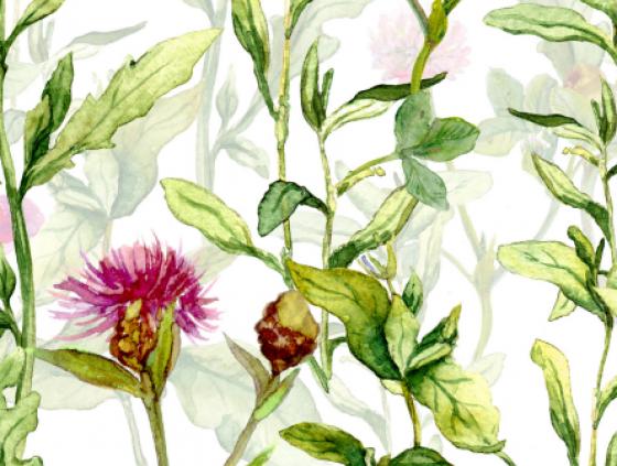 Liste de plantes indigènes utiles pour la biodiversité