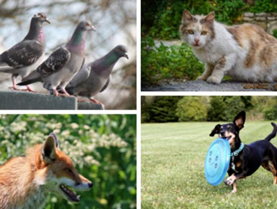 """Questionnaire """"Vivre avec les animaux en ville"""""""