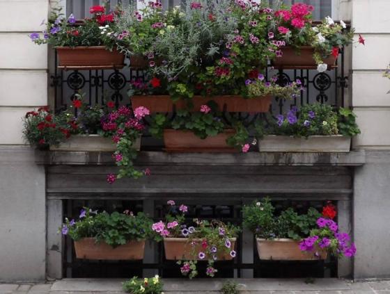 Distribution de semences de fleurs
