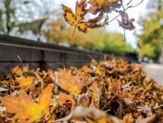Treillis pour les feuilles mortes