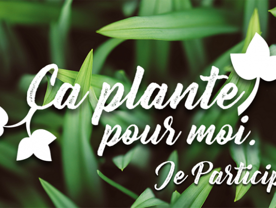 Plateforme pour végétaliser son environnement