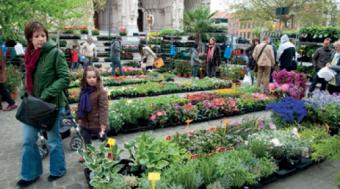 Marché floral de Laeken